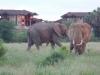 comp_elephants-3