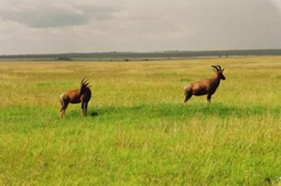 lofty_tours_kenia_tierwelt_11