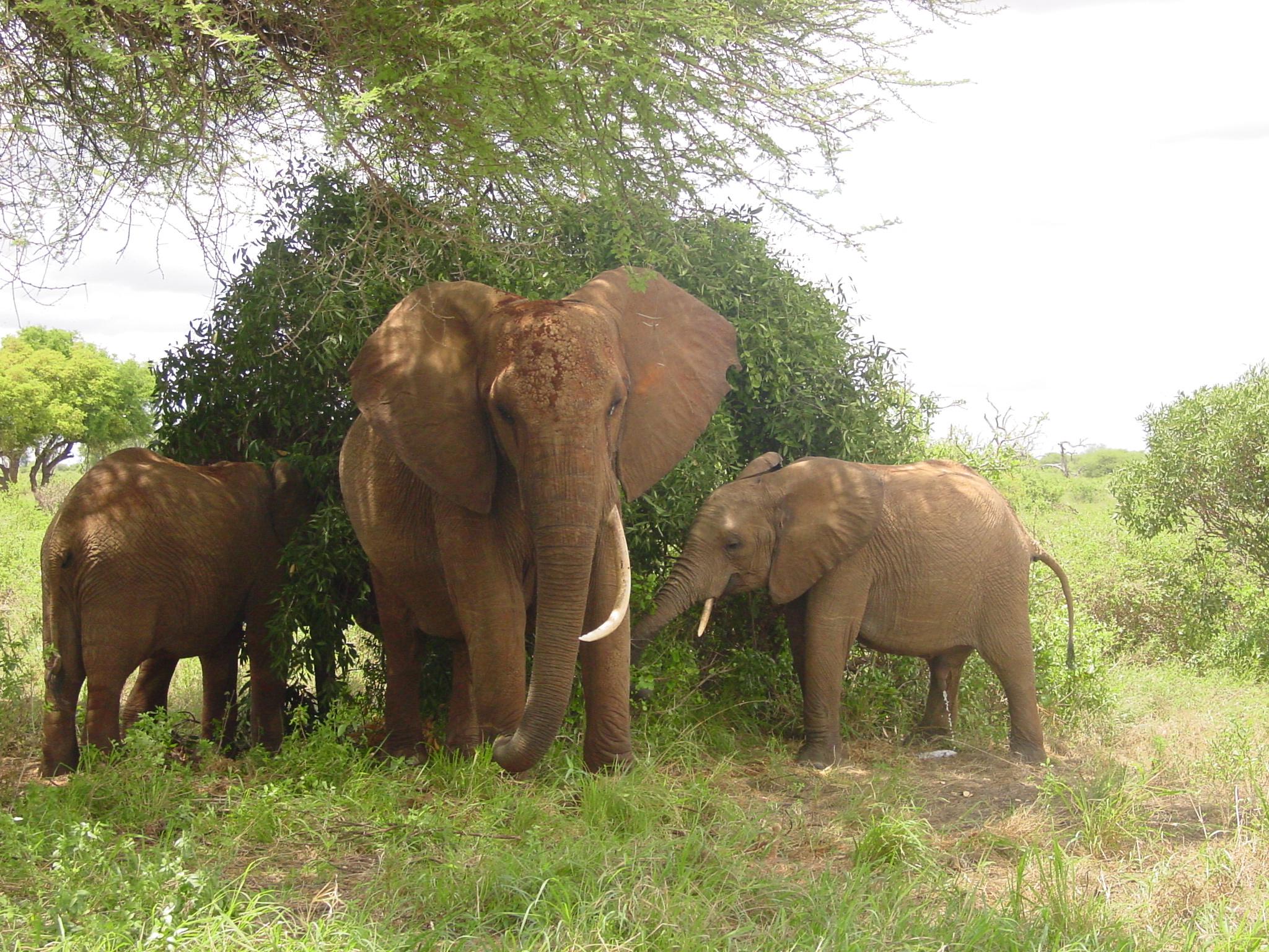 lofty_tours_kenia_tierwelt_17