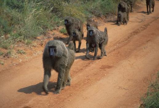lofty_tours_kenia_tierwelt_2
