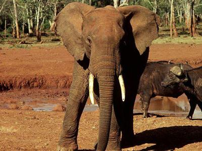 lofty_tours_kenia_tierwelt_21