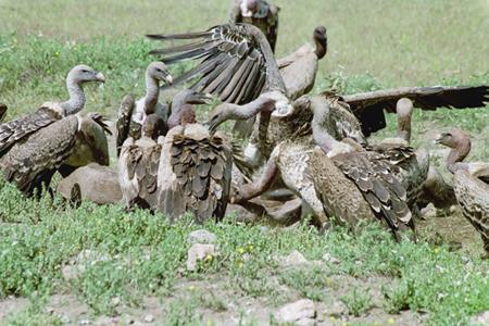 lofty_tours_kenia_tierwelt_30