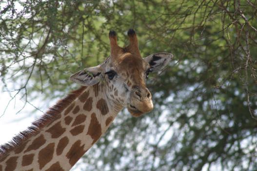 lofty_tours_kenia_tierwelt_34