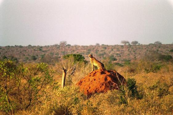 lofty_tours_kenia_tierwelt_48