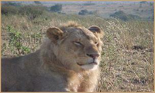 lofty_tours_kenia_tierwelt_55