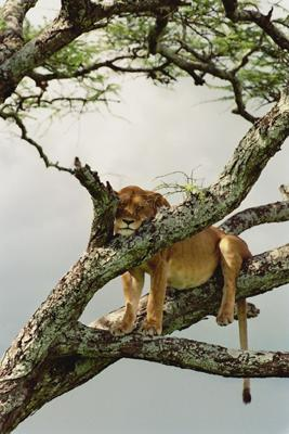 lofty_tours_kenia_tierwelt_62