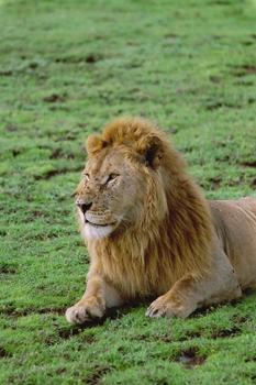 lofty_tours_kenia_tierwelt_64