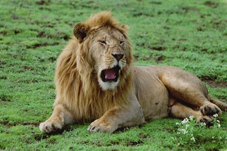 lofty_tours_kenia_tierwelt_65