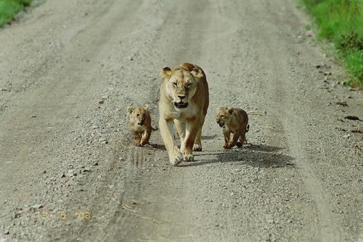 lofty_tours_kenia_tierwelt_66