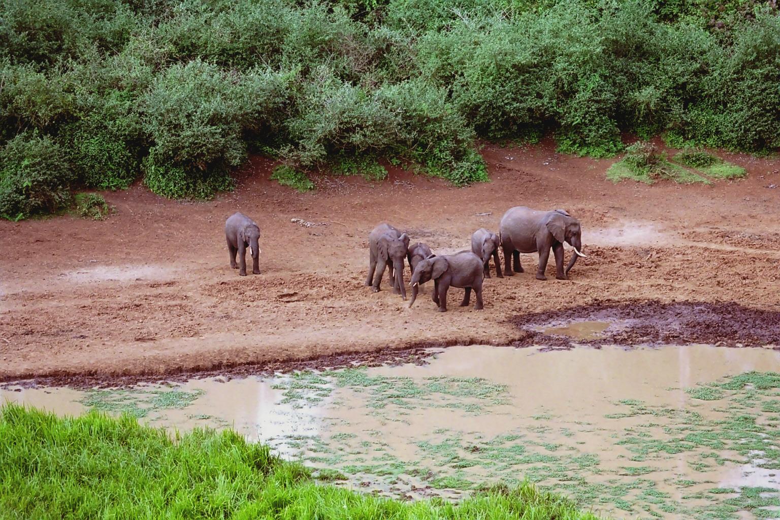 lofty_tours_kenia_tierwelt_68