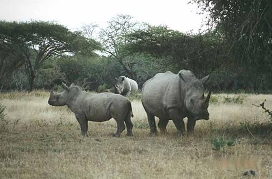 lofty_tours_kenia_tierwelt_73