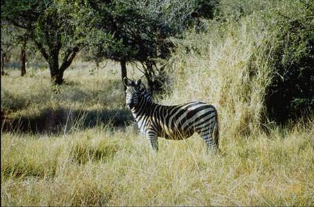 lofty_tours_kenia_tierwelt_82