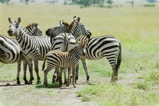lofty_tours_kenia_tierwelt_83