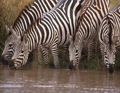 lofty_tours_kenia_tierwelt_86