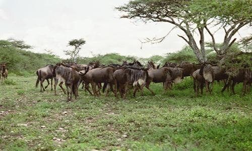 lofty_tours_kenia_tierwelt_9