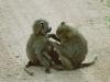 lofty_tours_kenia_tierwelt_1