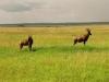 lofty_tours_kenia_tierwelt_11