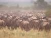 lofty_tours_kenia_tierwelt_12