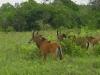 lofty_tours_kenia_tierwelt_14