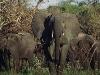 lofty_tours_kenia_tierwelt_22