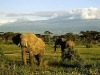 lofty_tours_kenia_tierwelt_23