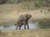 lofty_tours_kenia_tierwelt_24