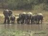 lofty_tours_kenia_tierwelt_25