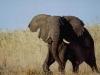 lofty_tours_kenia_tierwelt_26