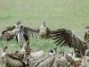 lofty_tours_kenia_tierwelt_31