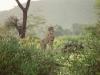 lofty_tours_kenia_tierwelt_32
