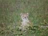 lofty_tours_kenia_tierwelt_33