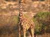 lofty_tours_kenia_tierwelt_35