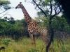 lofty_tours_kenia_tierwelt_36