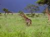 lofty_tours_kenia_tierwelt_37