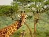 lofty_tours_kenia_tierwelt_38