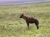 lofty_tours_kenia_tierwelt_44