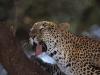 lofty_tours_kenia_tierwelt_49