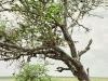 lofty_tours_kenia_tierwelt_50