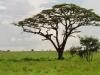 lofty_tours_kenia_tierwelt_52