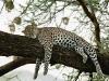 lofty_tours_kenia_tierwelt_53
