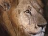 lofty_tours_kenia_tierwelt_54