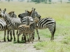lofty_tours_kenia_tierwelt_83