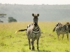 lofty_tours_kenia_tierwelt_84