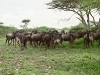 lofty_tours_kenia_tierwelt_9
