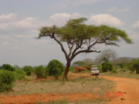 lofty_tours_tsavo_102636