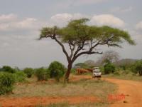 lofty_tours_tsavo_102636