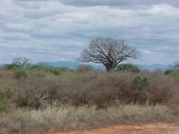 lofty_tours_tsavo_102646