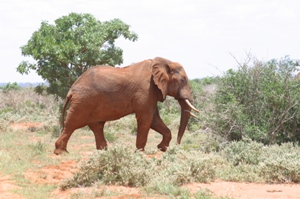 lofty_tours_tsavo_102640