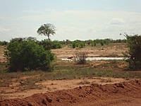 comp_tsavo-east-hyana-1-www-lofty-tours-com