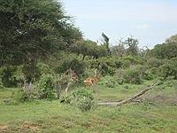 comp_tsavo-east-www-lofty-tours-com-2